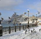 Сезонное жилье в Очакове